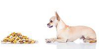 Hundesnacks