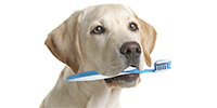 Pflege- & Hygieneartikel
