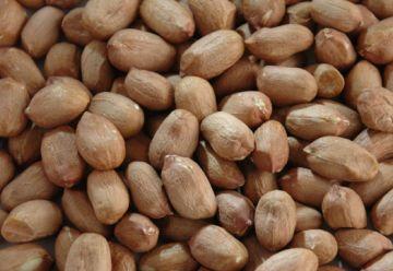 Erdnußkerne GANZE HANDVERLESEN 25kg