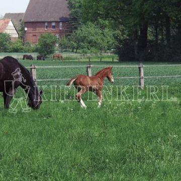 Kiepenkerl Country Horse 2117 Pferdeweide       10 kg