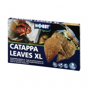 Dohse Catappa Leaves XL  12 Stück