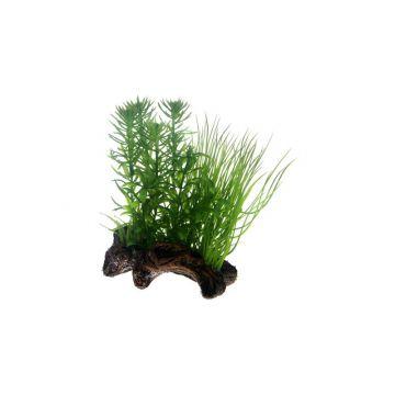 Dohse Flora Root  2   S   17 cm