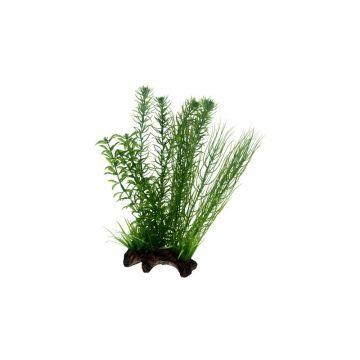 Dohse Flora Root  2   L   30 cm