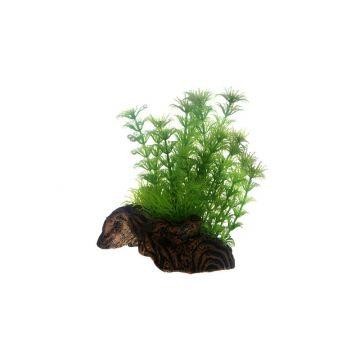 Dohse Flora Root  3   S   17 cm