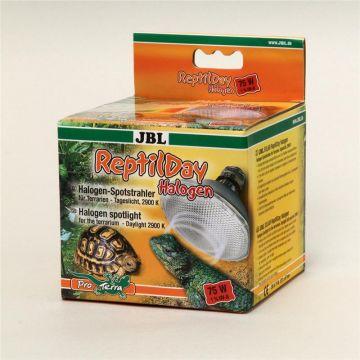 JBL ReptilDay Halogen 75 Watt