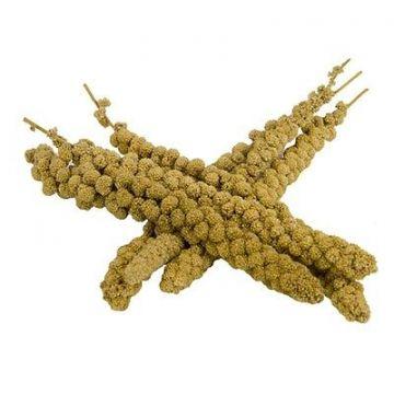Kolbenhirse chinesisch, gelb handverlesen 15kg