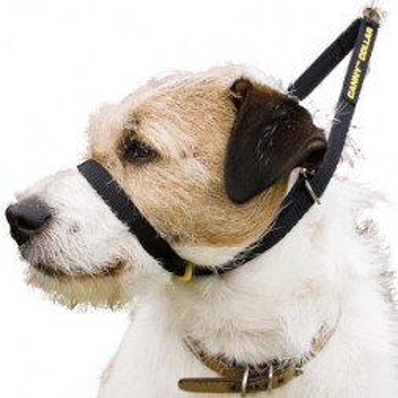 Canny Collar Erziehungshalsband Größe 1 (23 - 28cm) - schwarz