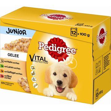 Pedigree Portionsbeutel Junior in Gelee im Multipack 12x100g (Menge: 4 je Bestelleinheit)