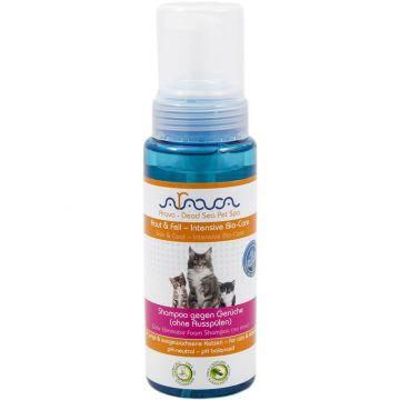Arava Katzen Shampoo gegen Gerüche ohne Ausspülen 250 ml